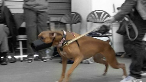 growl-class-a-workshop-demo-for-reactive-dogs