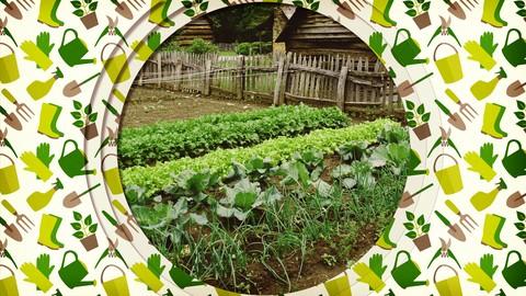 The Beginner's Guide to Vegetable Gardening.jpg